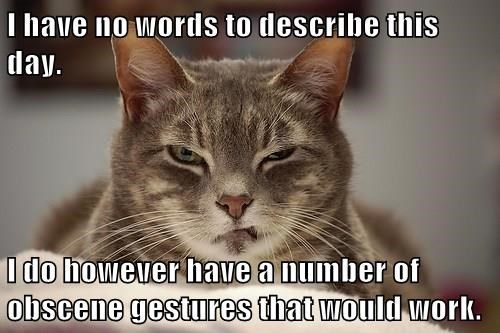 Cat - I have no words to describe this day. I do however have a number of obscene gestures that would work.