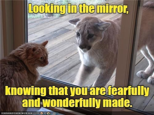 Cat - Looking in the mirror, knowing that you áre fearfully and wonderfully made. ICANHASCHEEZEURGER.COM