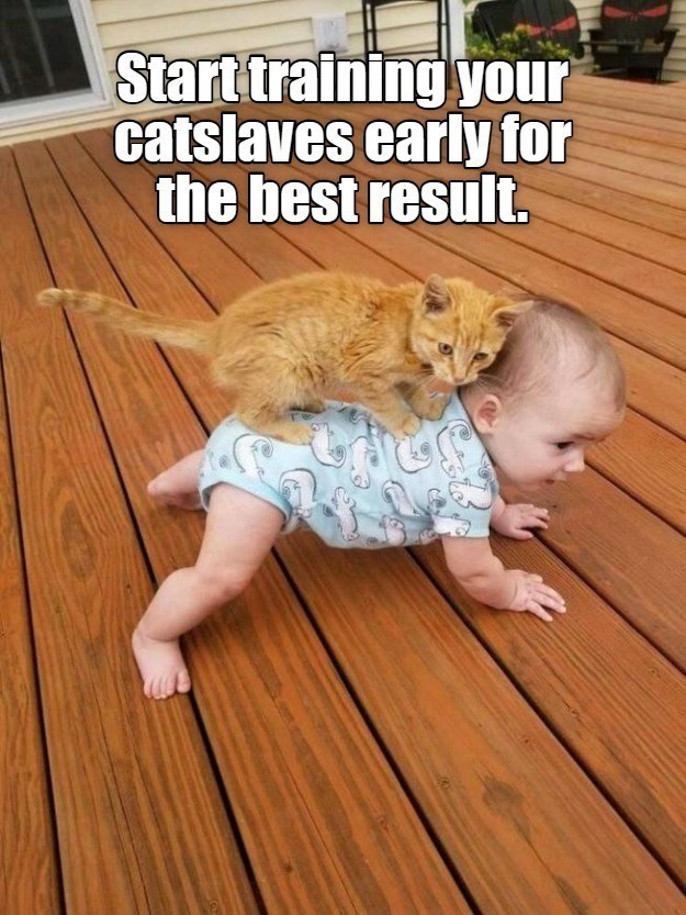 Floor - Start training your catslaves early for the best result.