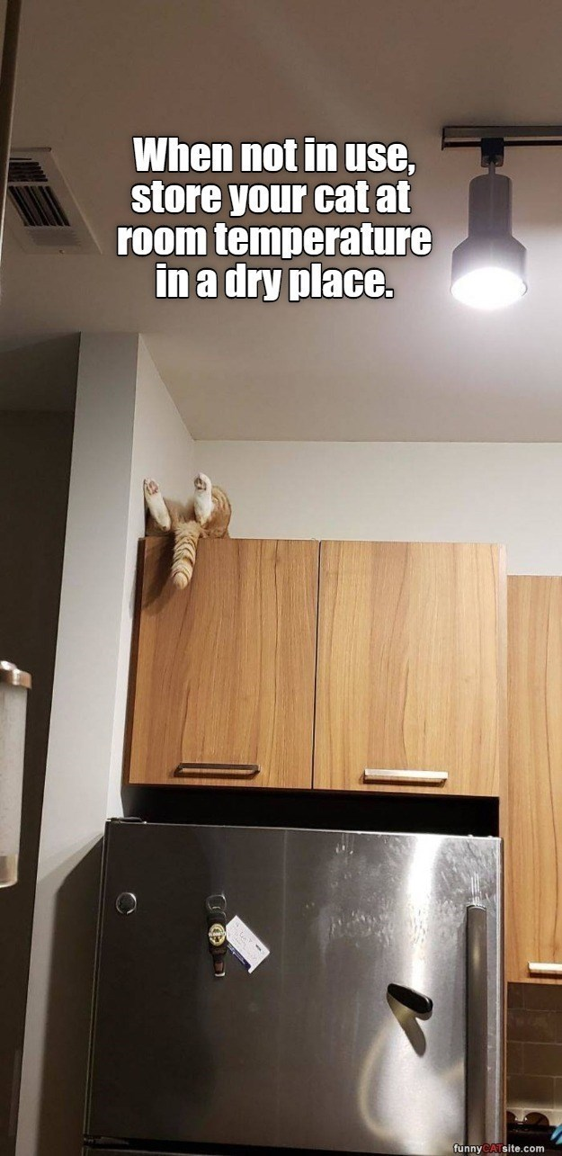 Wall - When not in use, store your cat at room temperature in a dry place. funny site.com