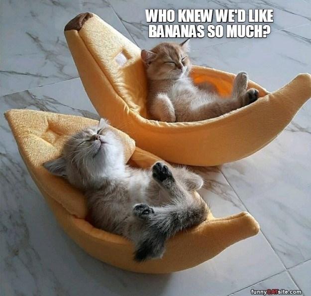 Cat - WHO KNEW WE'D LIKE BANANAS SO MUCH? funnyCATsite.com
