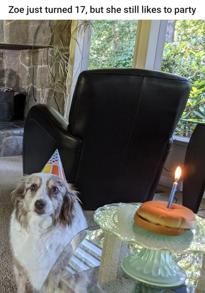 Dog - Zoe just turned 17, but she still likes to party