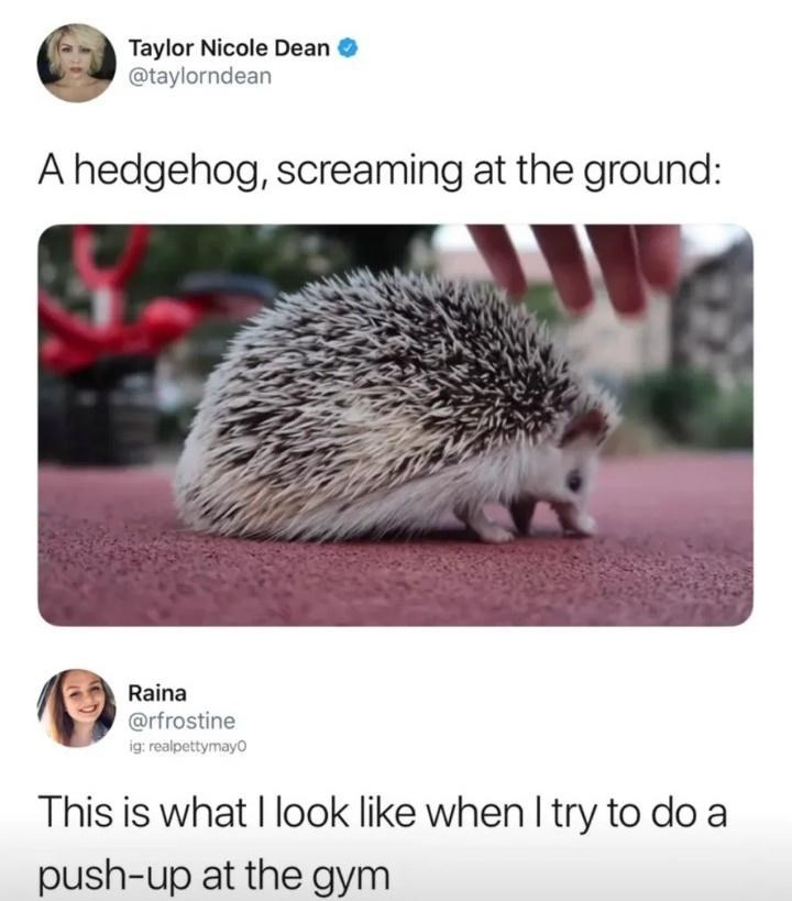 Photo caption - Hedgehog - Taylor Nicole Dean @taylorndean A hedgehog, screaming at the ground: Raina @rfrostine ig: realpettymayo This is what I look like when I try to do a push-up at the gym