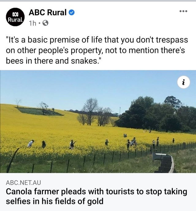 """Grassland - 00 ABC Rural Rural ... 1h: O """"It's a basic premise of life that you don't trespass on other people's property, not to mention there's bees in there and snakes."""" i ABC.NET.AU Canola farmer pleads with tourists to stop taking selfies in his fields of gold"""