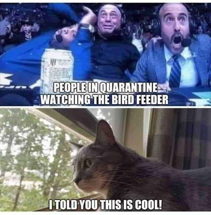 Photo caption - PEOPLE IN QUARANTINE WATCHING THE BIRD FEEDER I TOLD YOU THIS IS COOL!