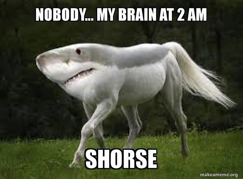 Photo caption - NOBODY. MY BRAIN AT 2 AM SHORSE makeameme.org