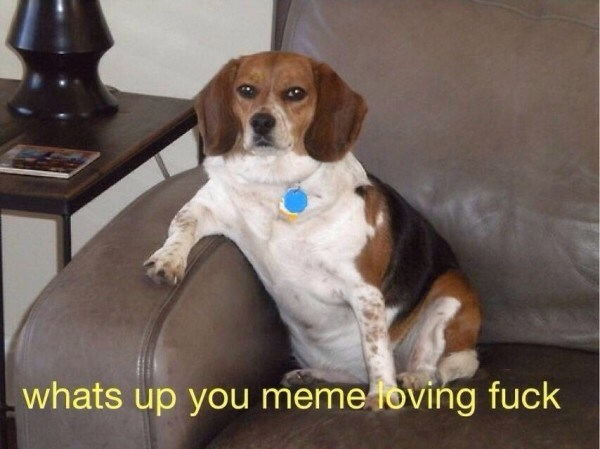 Dog - whats up you meme loving fuck