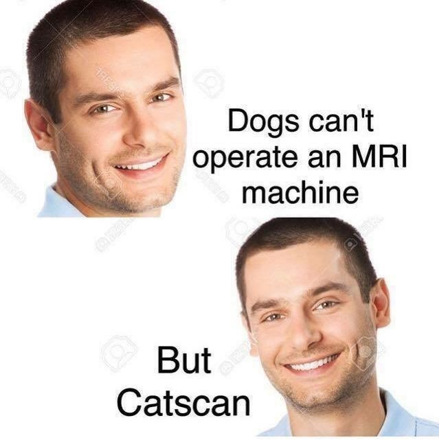 Face - Dogs can't operate an MRI machine But Catscan RES RNA