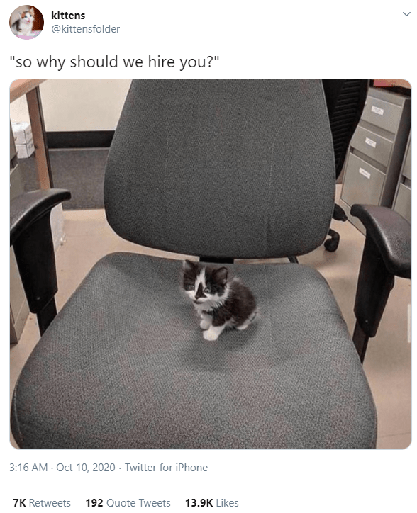 """Chair - kittens @kittensfolder """"so why should we hire you?"""" 3:16 AM - Oct 10, 2020 - Twitter for iPhone 7K Retweets 192 Quote Tweets 13.9K Likes"""