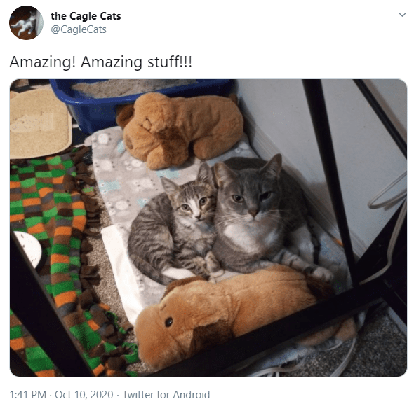 Cat - the Cagle Cats @CagleCats Amazing! Amazing stuff!!! 1:41 PM · Oct 10, 2020 · Twitter for Android