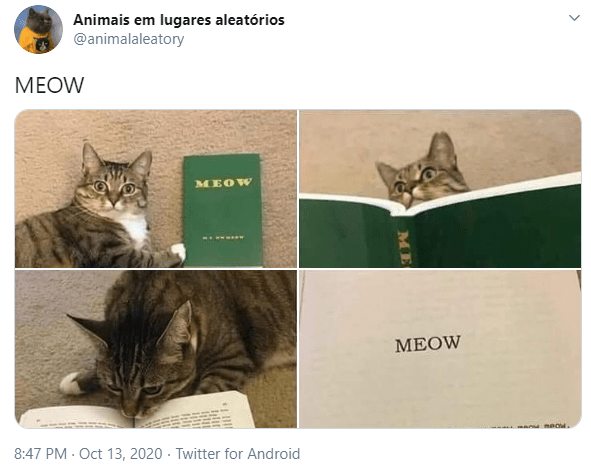 Cat - Animais em lugares aleatórios @animalaleatory МEOW MEOW MEOW 8:47 PM · Oct 13, 2020 · Twitter for Android ME
