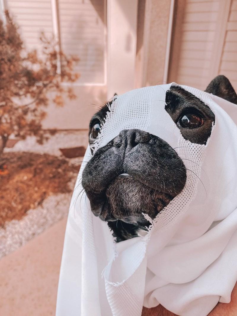 Pug - .....