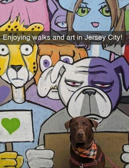 Dog - Enjoying walks and art in Jersey City!