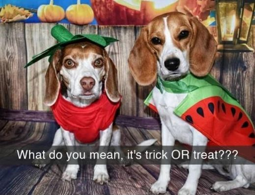Dog - What do you mean, it's trick OR treat???