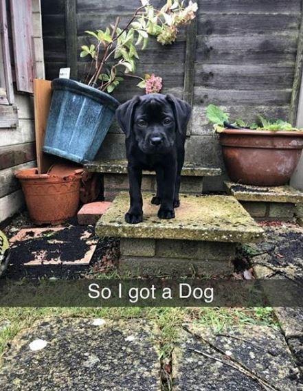 Dog - So I got a Dog