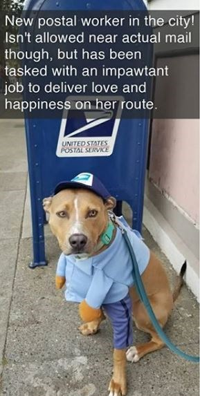 Dog - New postal worker in the city! Isn't allowed near actual mail though, but has been tasked with an impawtant job to deliver love and happiness on her route. UNITED STATES POSTAL SERVICE