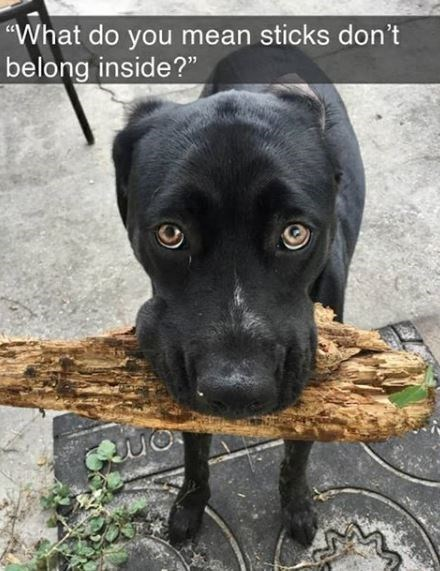 "Dog - ""What do you mean sticks don't belong inside?"""