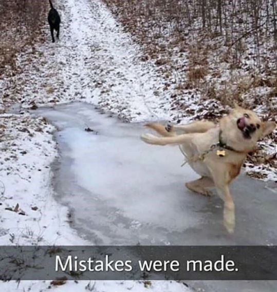 Dog - Mistakes were made.