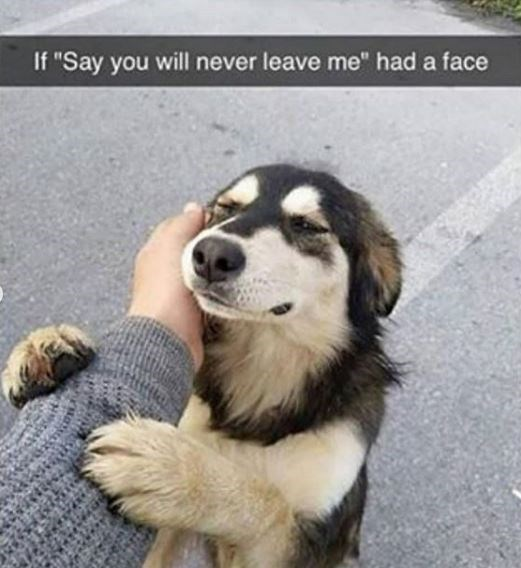 """Mammal - If """"Say you will never leave me"""" had a face"""