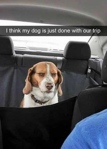 Dog - I think my dog is just done with our trip