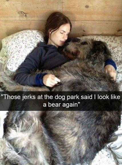 "Fur - ""Those jerks at the dog park said I look like a bear again"""