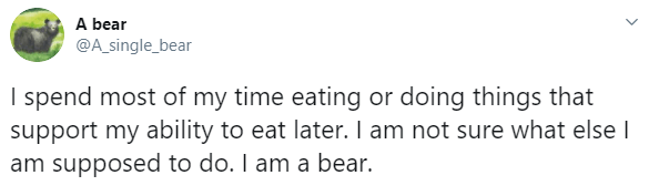 Text - A bear @A_single_bear I spend most of my time eating or doing things that support my ability to eat later. I am not sure what else I am supposed to do. I am a bear.