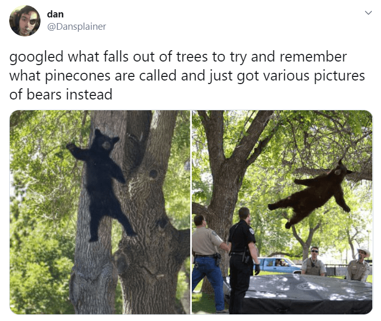 Tree - dan @Dansplainer googled what falls out of trees to try and remember what pinecones are called and just got various pictures of bears instead