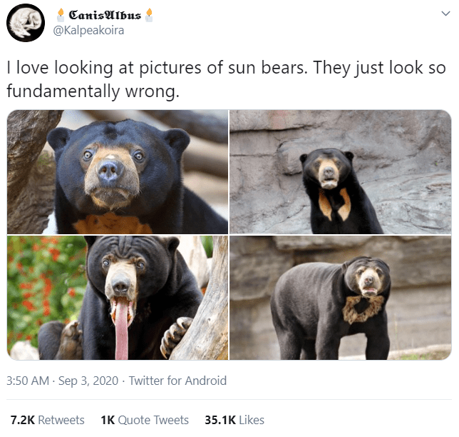 Sun bear - CanisAlbus @Kalpeakoira I love looking at pictures of sun bears. They just look so fundamentally wrong. 3:50 AM - Sep 3, 2020 · Twitter for Android 7.2K Retweets 1K Quote Tweets 35.1K Likes