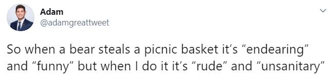 Text - Adam @adamgreattweet So when a bear steals a picnic basket it's