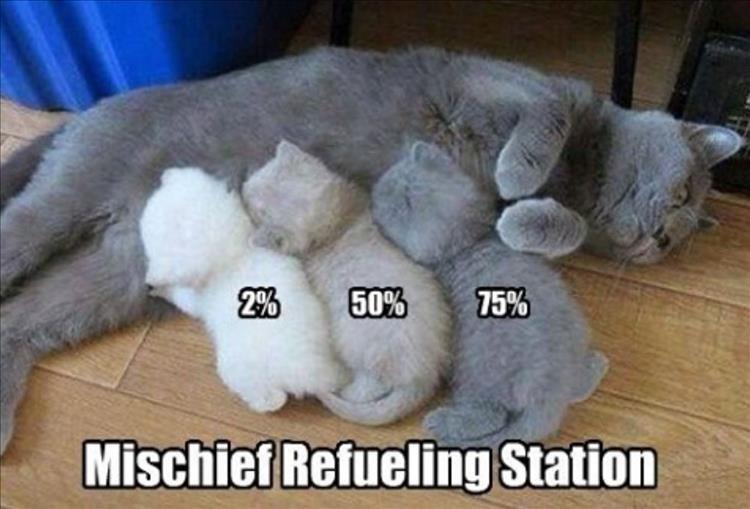 Cat - 2% 50% 75% Mischief Refueling Station