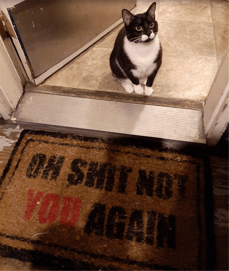 Cat - OH SHIT NO VO AGAIN