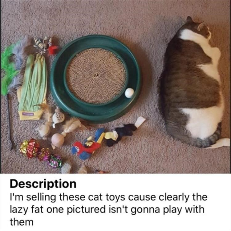 Cat - Description I'm selling these cat toys cause clearly the lazy fat one pictured isn't gonna play with them