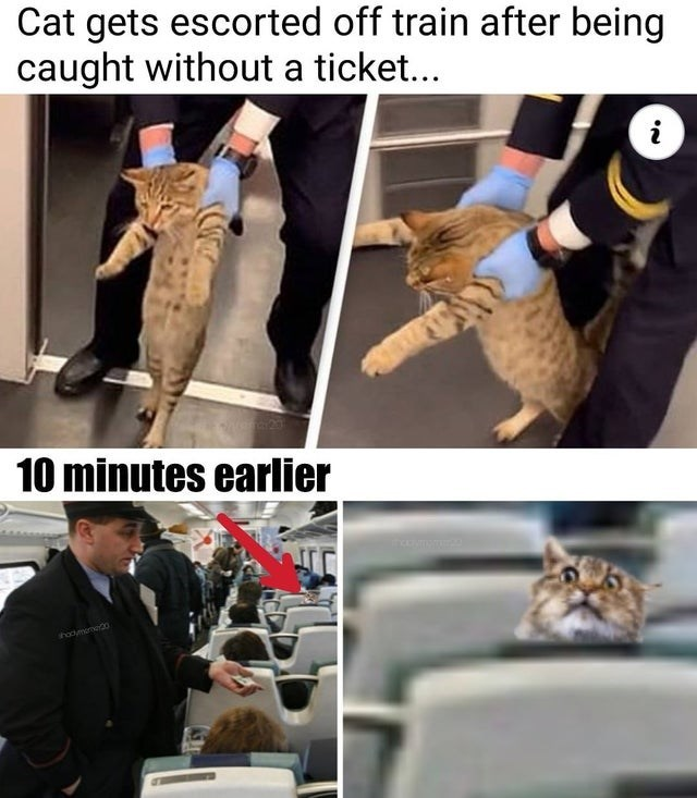 Photo caption - Cat gets escorted off train after being caught without a ticket... i 10 minutes earlier hadymome0