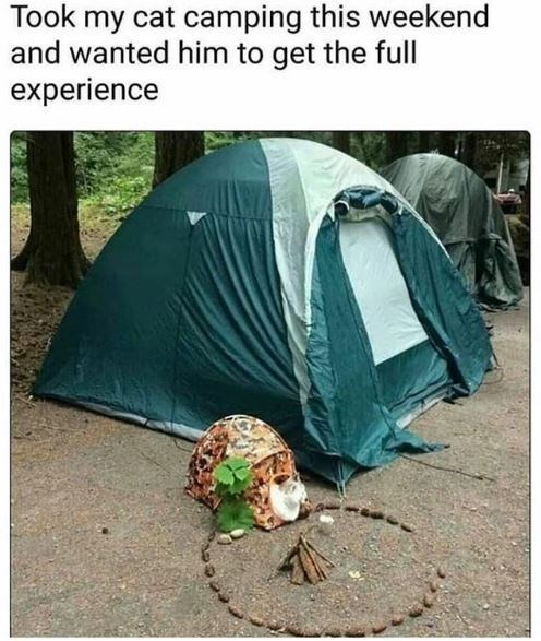 Tent - Took my cat camping this weekend and wanted him to get the full experience