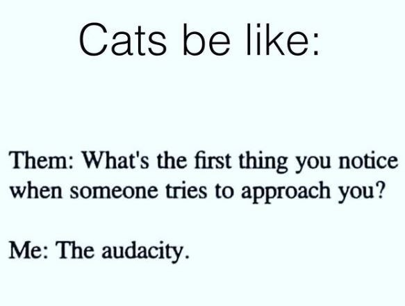 Text - Cats be like: Them: What's the first thing you notice when someone tries to approach you? Me: The audacity.