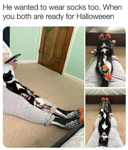 Footwear - He wanted to wear socks too. When you both are ready for Halloweeen