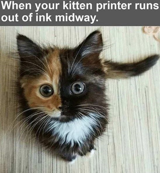 Cat - When your kitten printer runs out of ink midway.