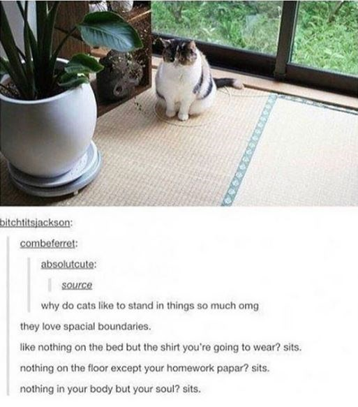 Cat - bitchtitsjackson: combeferret: absolutcute: source why do cats like to stand in things so much omg they love spacial boundaries. like nothing on the bed but the shirt you're going to wear? sits. nothing on the floor except your homework papar? sits. nothing in your body but your soul? sits.