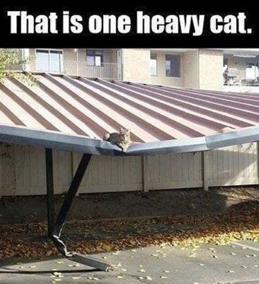 Roof - That is one heavy cat.