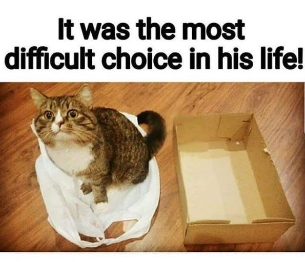 Cat - It was the most difficult choice in his life!