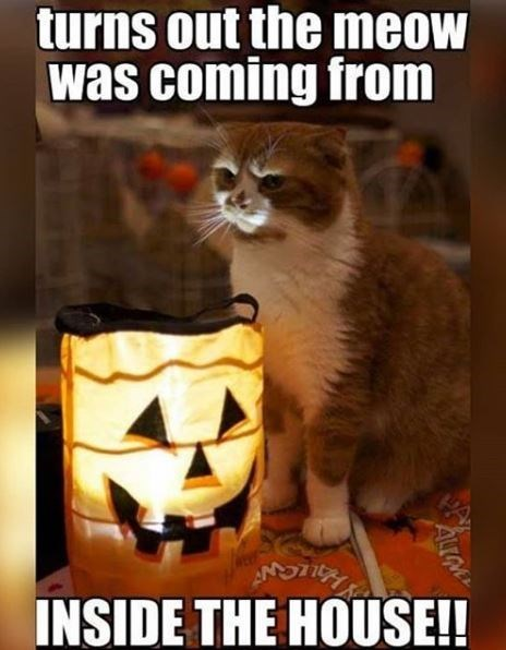 Photo caption - turns out the meow was coming from INSIDE THE HOUSE! ALGM