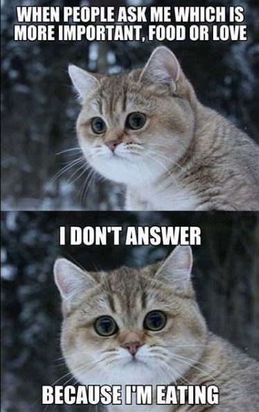 Cat - WHEN PEOPLE ASK ME WHICH IS MORE IMPORTANT, FOOD OR LOVE I DON'T ANSWER BECAUSE I'M EATING