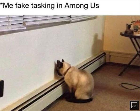 Cat - *Me fake tasking in Among Us