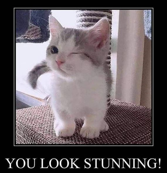 Cat - YOU LOOK STUNNING!
