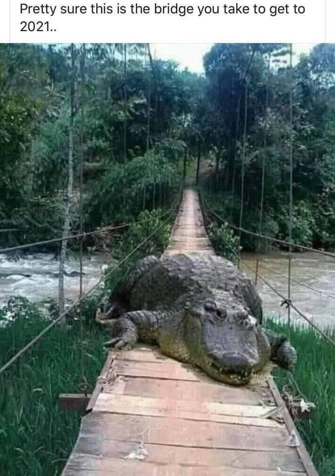 Pretty sure this is the bridge you take to get to 2021.. crocodile alligator blocking the way across a bridge