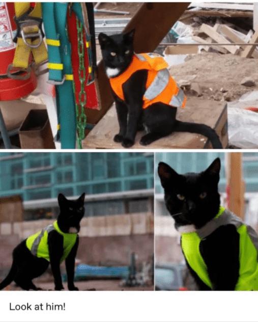 Black cat - Look at him!