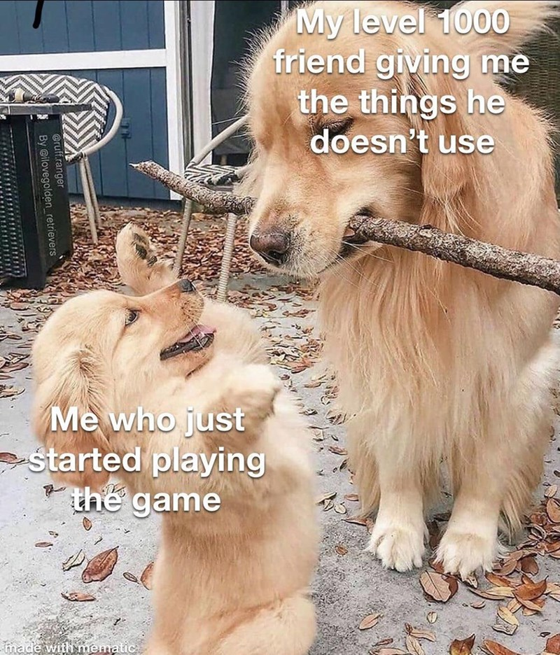 Dog - My level 1000 friend giving mè the things he doesn't use Me who just started playing the game made with mematic @ruff.ranger By @ilovegolden_retrievers