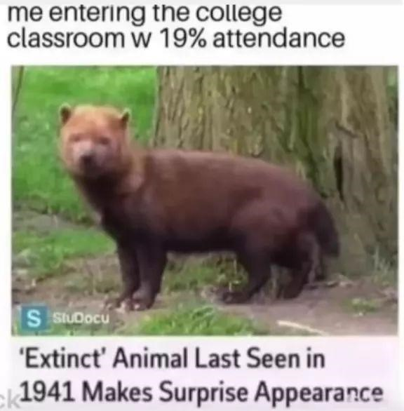 Mammal - me entering the college classroom w 19% attendance S stUDocu 'Extinct' Animal Last Seen in |1941 Makes Surprise Appearance