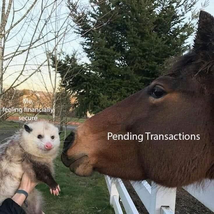 Mammal - Me feeling financially secure Pending Transactions