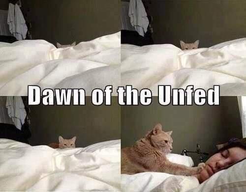 Felidae - Dawn of the Unfed